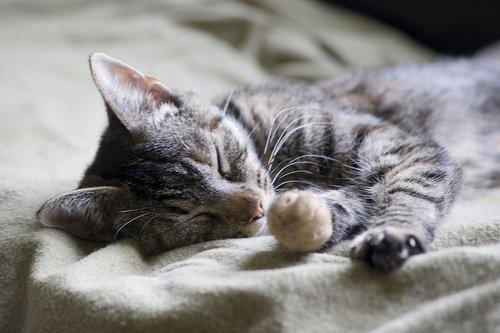 pet-home-organizing