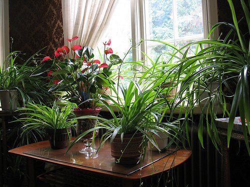 Indoor plants important part of interior design - Pretty indoor plants ...