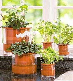 House plant arrangement ideas