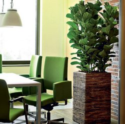 Indoor Plants – Important Part Of Interior Design - www.tidyhouse.info