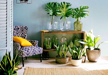 home organizing tips having plants indoors