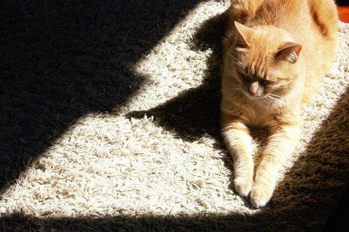 pet-carpets