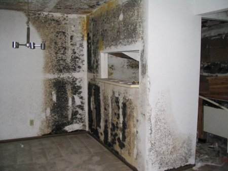 Black Mold Has A Greenish Color To It And When You Notice The Wall Starting Stain Underneath Wallpaper Or