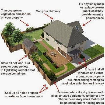 Rodent Proofing Your Home