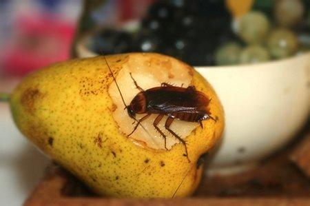 Cockroach-kitchen