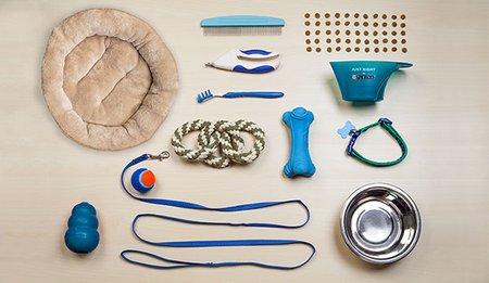 dog-equipments