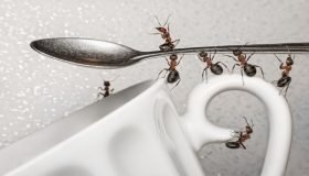 How To Control Ants In Your Home?